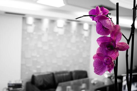 οδοντιατρείο λουλούδια